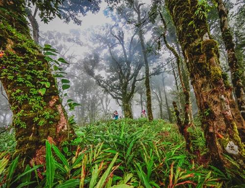 Ecotourism & Adventures